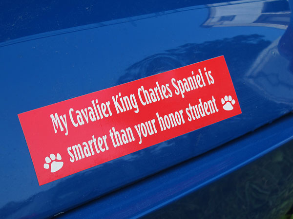 My Cavalier King Charles Spaniel is smarter than your honor student.